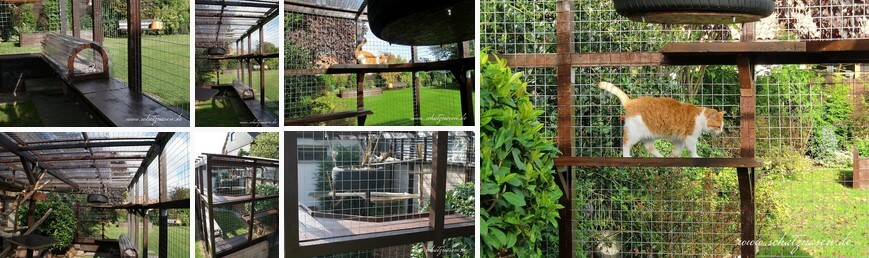 Katzengehege Bauen im katzengehege muss renoviert werden