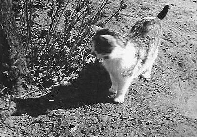 Omas Katze ``Susi``