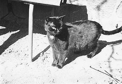 Omas Katze ``Mohrchen``