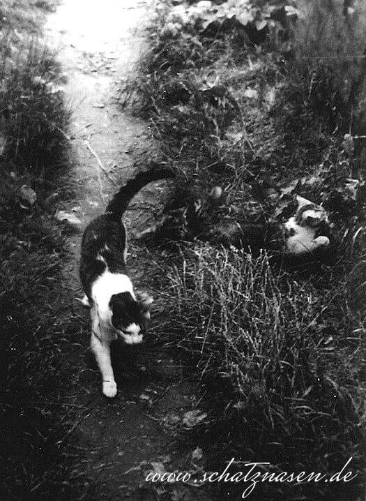 Meine erste eigene Katze ``Moulin Rouge``