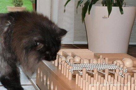 Katzenblog - ein Fummelbrett für Katzen