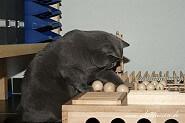 Katzenfummelbrett selbstgebaut