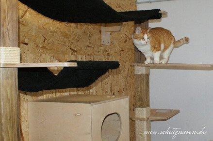 Katzenblog - Wandkratzbäume für Katzen