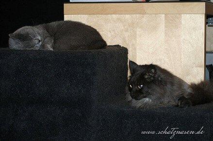 Katzenblog - Liegehocker für Katzen