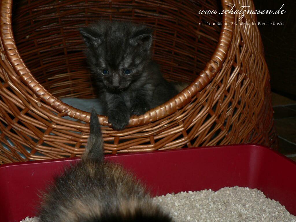 Katzenwurf-2006-07-20-127
