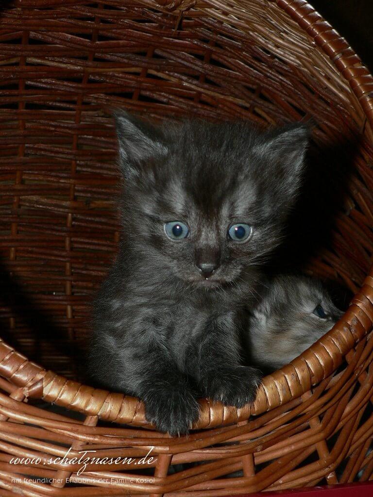 Katzenwurf-2006-07-20-128