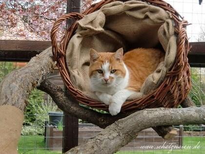 Weidenkorb als Kuschelplatz für Katzen