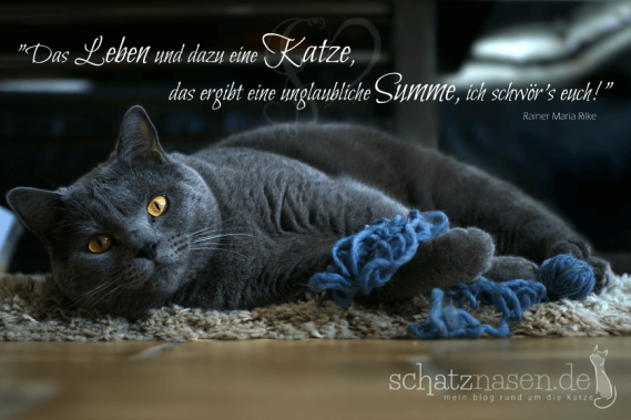 Spruchbilder Katzensprueche Katzenweisheiten Katzenzitate Das Leben und dazu