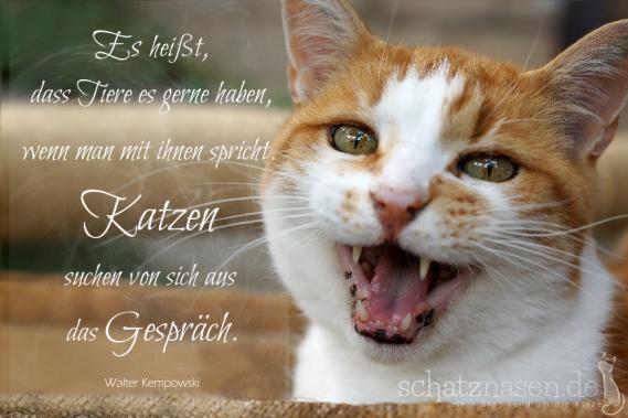Spruchbilder Katzensprueche Katzenweisheiten Katzenzitate Es heisst dass Tiere es gerne haben