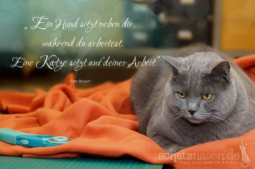 Spruchbilder Katzensprueche Katzenweisheiten Katzenzitate Ein Hund sitzt neben dir