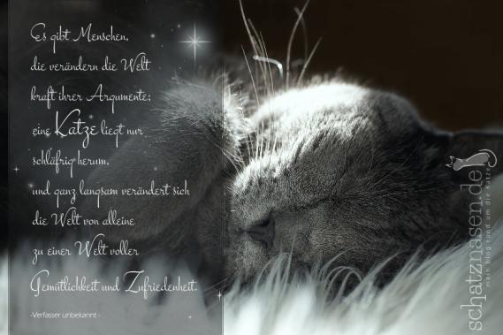 spruchbilder katzensprueche katzenweisheiten katzenzitate es gibt menschen die veraendern die welt