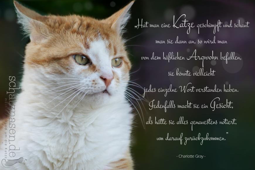 Spruchbilder Katzensprueche Katzenweisheiten Katzenzitate Hat man eine Katze geschimpft