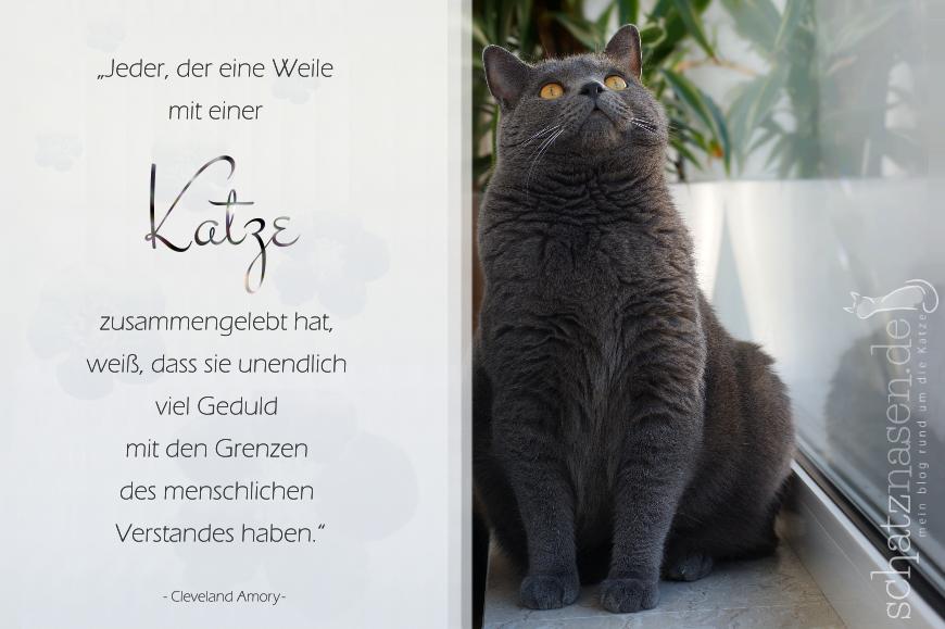 Spruchbilder Katzensprueche Katzenweisheiten Katzenzitate Jerder der eine Weile mit Katzen
