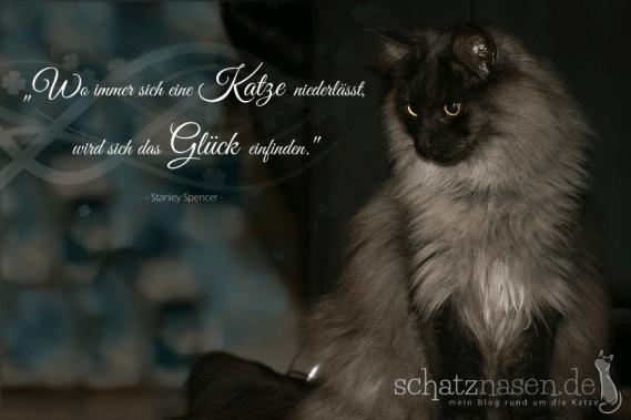 Spruchbilder Katzensprueche Katzenweisheiten Katzenzitate Wo immer sich eine Katze niederlaesst