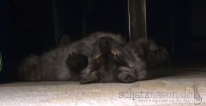 Katzenblog - Oben ohne