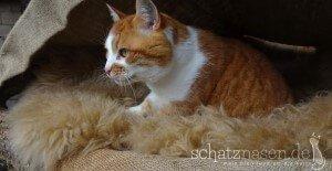 Katzenblog - Katze im Schaffell
