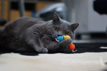 Percy spielt mit Kugelraupe Katzenspielzeug DIY