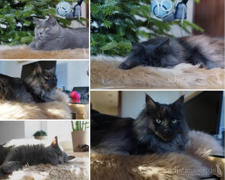 Schaffell-für-Katzen