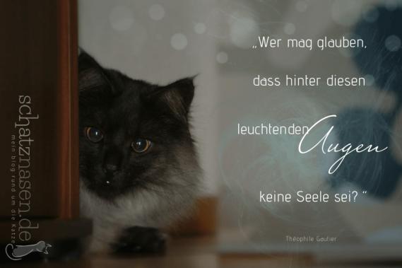 Spruchbilder-Katzensprueche-Katzenweisheiten-Katzenzitate-Wer-mag-glauben-dass-hinter-diesen-leuchtenden-Augen