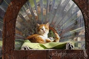 Schatzi auf seiner Sonnenbank im Freigehege