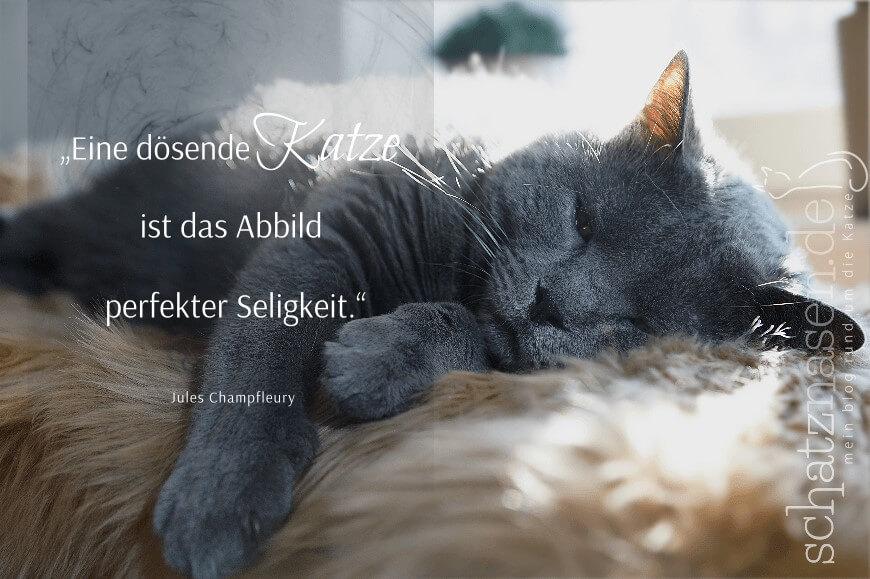 Spruchbilder Katzensprueche Katzenweisheiten Katzenzitate Eine dösende Katze