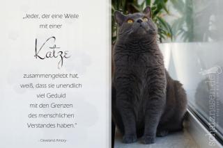 Jeder, der eine Weile mit Katzen gelebt hat…