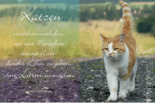 Katzen erreichen mühelos, was uns Menschen…