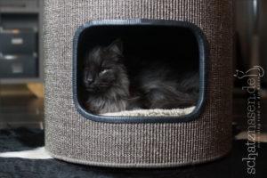 Eine selbstgebaute Kratztonne für Katzen