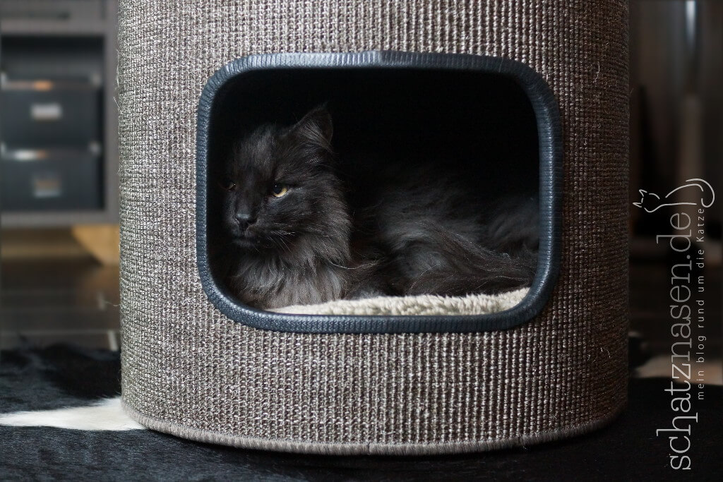 selbstgemachte Kratztonne für Katzen