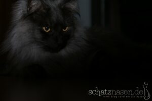 Wenn Katzen wissen, was ihren Menschen weh tut